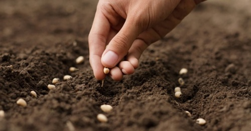 Planting Seeds, Preparing for a Transaction